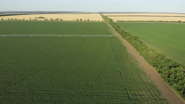 Aerial View Field with Rows of Corn and Center Pivot Irrigation System in Cornfield at Sunset.