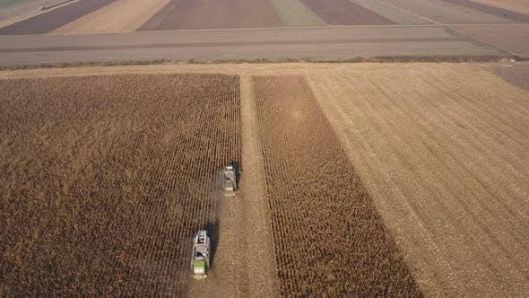 Corn Harvest And Fields Landscape