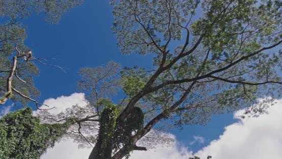 Thumbnail for Rainforest 4K