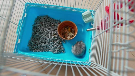 Thumbnail for Top view of the hamster inside the cage