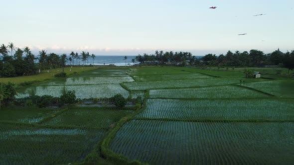 Thumbnail for Kites Fly on the Ocean Shore Near the Rice Terraces