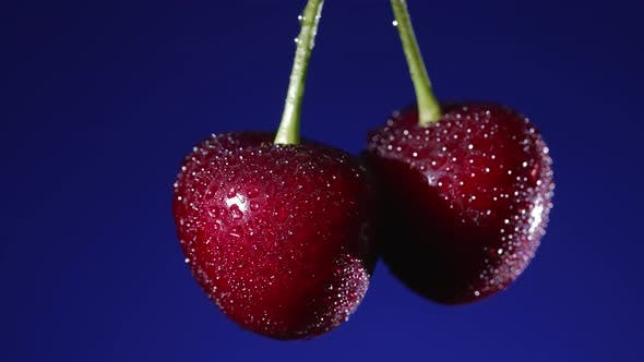 Ripe Cherries on a Blue Background