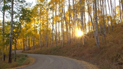 Sun bursting through aspen tree forest over windy path in Fall