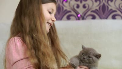 Beautiful girl playing with a gray, fluffy kitten