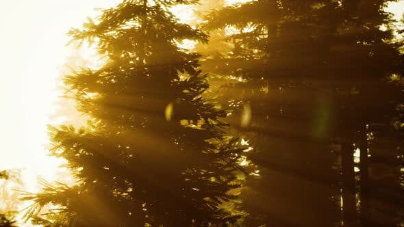 Thumbnail for Misty Forest To the Rising Day
