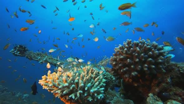 Thumbnail for Underwater Marine Life