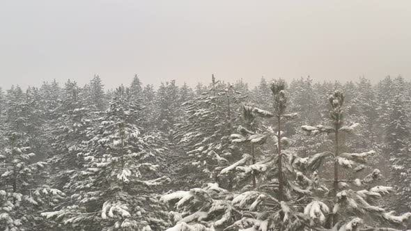 Thumbnail for Fog in the woods by January 4K aerial video