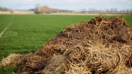 Thumbnail for Manure Lying in Field in Countryside