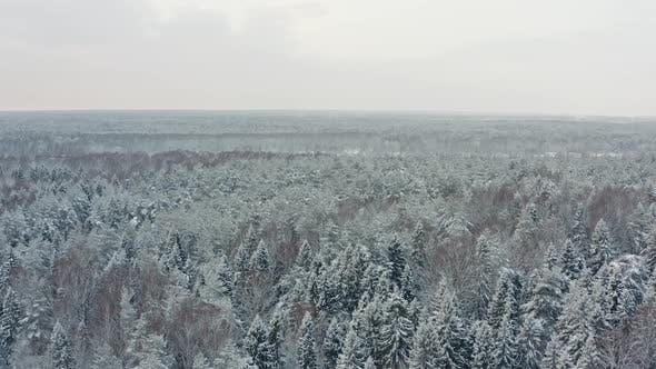 Thumbnail for Aerial View of Boundless Winter Forest Landscape
