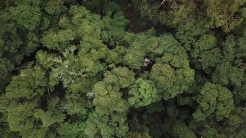 Top-down view of bush