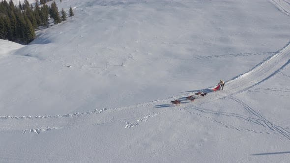 Thumbnail for Aerial view of a dog sled racing  in the mountains