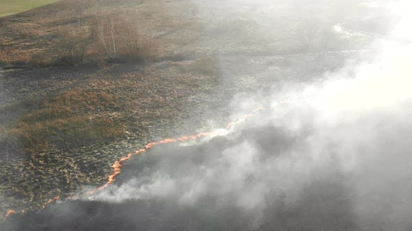 Großflächige Brände. Verbrennung von Gras und Bäumen in einem großen Gebiet.