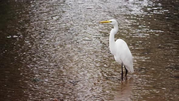Full body shot of white egret in Rio.