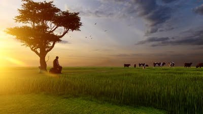 Cattle Grazing and Shepherd