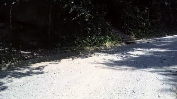 Thumbnail for Wonderful Gray Brown Road at Dense Forest with Huge Palms