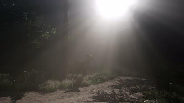 Thumbnail for Deer Female in Forest in Fog