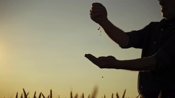 Thumbnail for Silhouette eines Bauern mit Körnern bei Sonnenuntergang
