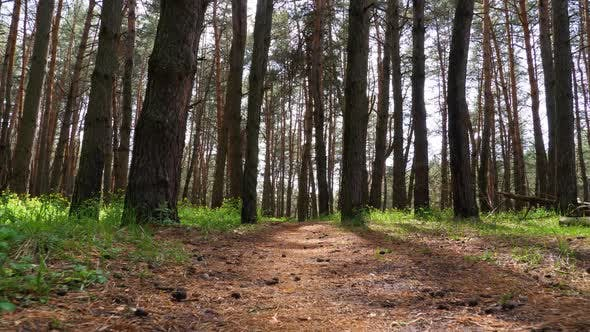 Thumbnail for POV Hiking on Trail Path Through Green Forest. Walking on a Path in the Woods