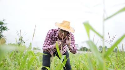 Farmer phone checking
