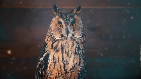 Thumbnail for Cute owl with big eyes perching on branch turning head around looking at camera
