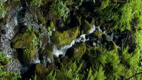 Thumbnail for Vertical Brook and Wet Forest Foliage. Austria. European Alps