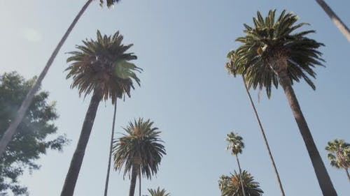 Palmen Kalifornien