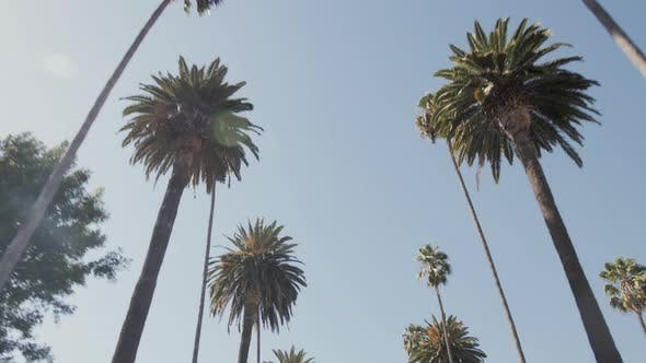 Thumbnail for Palm Trees