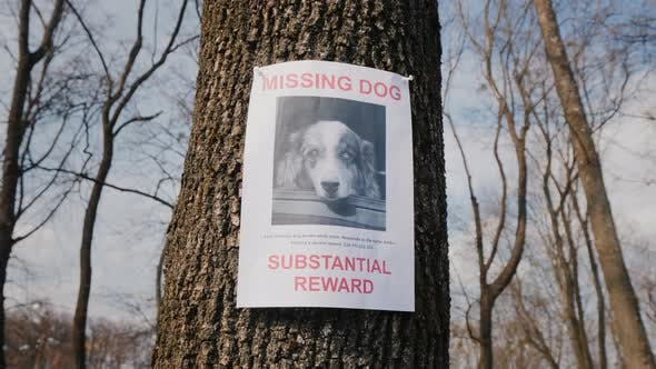 On the Tree Hangs a Poster About the Disappearance of the Dog Breed Australian Shepherd