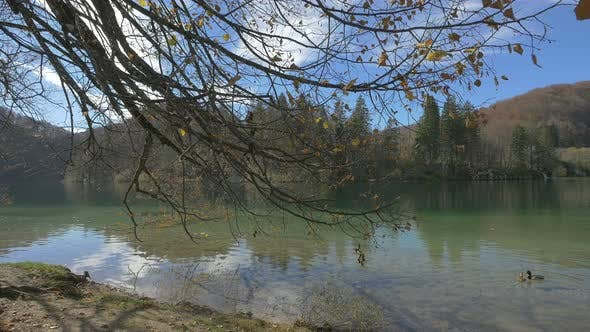 Thumbnail for Lake with ducks in Plitvice National Park