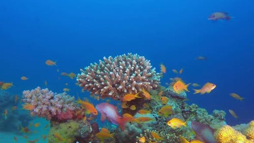 Underwater Beauty Fishes and Corals