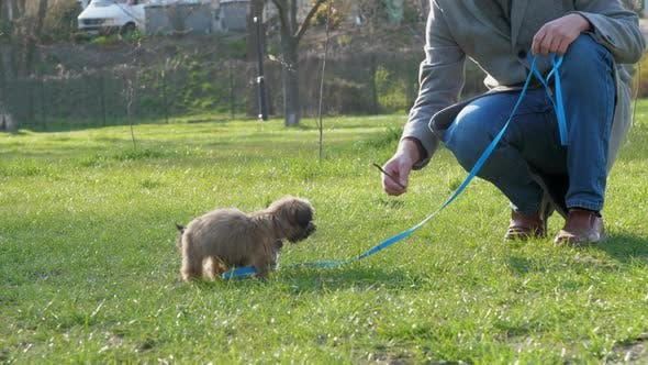 Man Squats and Holds Leash with Lovely Playing Pedigreed Dog
