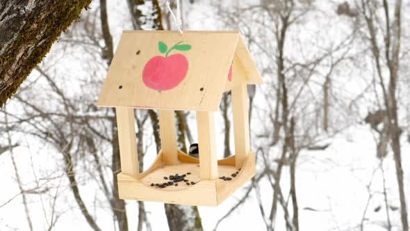 Thumbnail for Bird Feeder in the Park