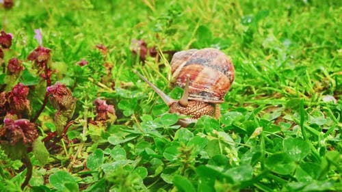 Snail(2.7K)