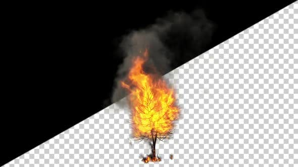 Thumbnail for Burning Tree