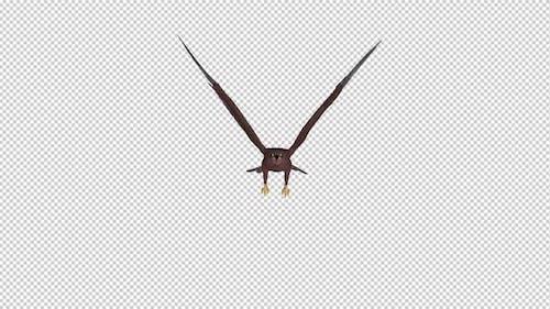 Tropical Kite - Flying Loop - Front View