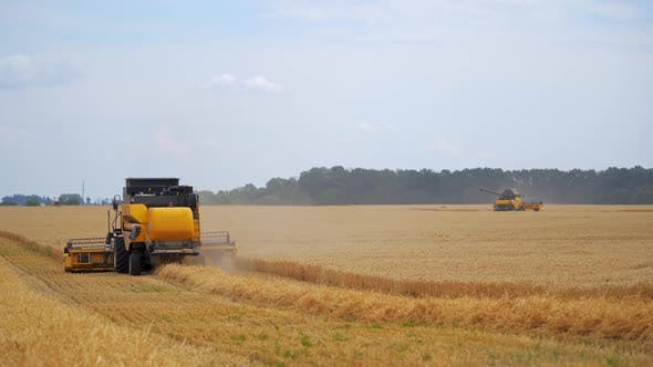 Combine harvester at work harvesting a field of wheat. Agricultural machinery theme.