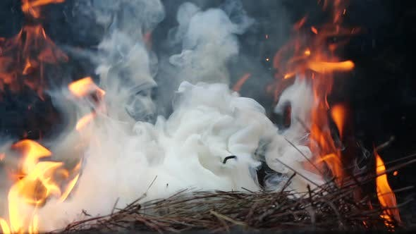 Thumbnail for Close Up Bonfire Flames of Camping Fire, Slow Motion of Burning Wood and Smoke in the Grill. Cooking