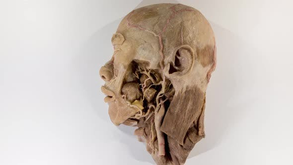 Human Head - product preview 0