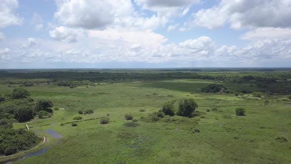 Cattle Dry Season in Brazil South America
