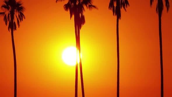 Thumbnail for Sonnenuntergang hinter Palmen