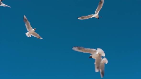 Seagulls In Graceful Flight