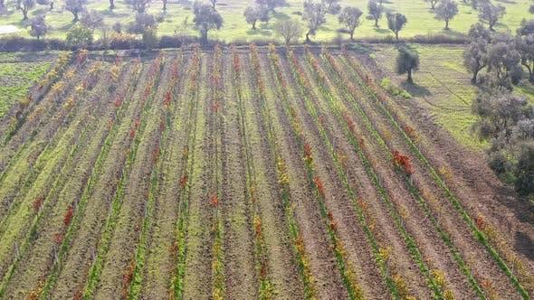 Thumbnail for Vineyard Aerial