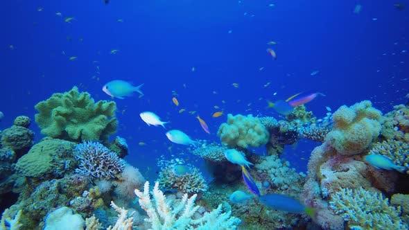 Unterwasser-bunte Landschaft