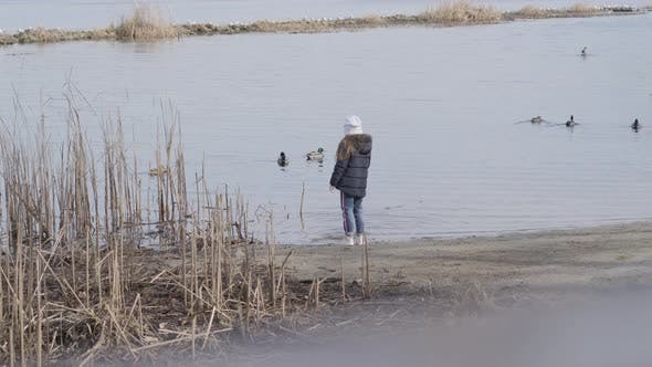 Caucasian Girl Standing on Riverbank and Looking at Ducks. Back View of Little Child Spending Autumn