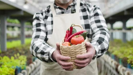 Thumbnail for Senior Male Caucasian Hands Stretching Basket with Vegetables To Camera. Mature Male Gardener