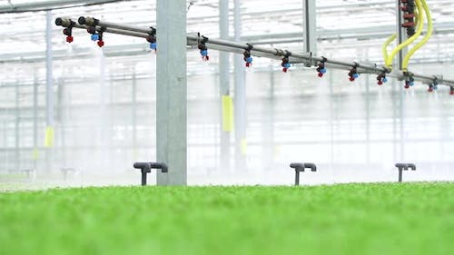 Farm Greenhouse Shot of Equipment Moves Over Plantation with Green Plants and Sprays Indoors Spbd