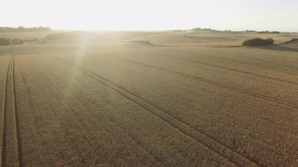 Sun Shining Brightly Over a Large Field of Crops