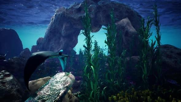 Thumbnail for Underwater Blue ocean