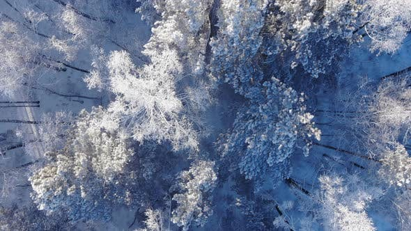Thumbnail for Aerial Shot of Winter Forest
