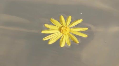 Liquid Yellow Flower In Water